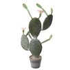Wildon Home Cactus with Flower Plant in Pot