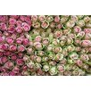 Marmont Hill 'Roses in Pink' by Jody Stuart Photographic Print on Wrapped Canvas