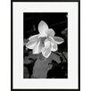 David & David Studio 'Lotus 2' by Laurence David Framed Photographic Print