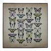 Castleton Home 'Papilio Butterfly' Graphic Art on Wood