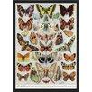 Wildon Home 'Papillons' Framed Graphic Art Print