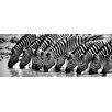 Hazelwood Home 'Zebra Pit Stop' Photographic Print on Glass