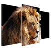 Bilderdepot24 Lion Head 3-Piece Photographic Print on Canvas Set