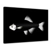 Bilderdepot24 Fish Framed Photographic Print