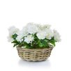 Castleton Home Rattan Rose Floral Arrangements in Basket