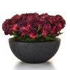 Castleton Home Begonia Floral Arrangements in Moscow Pot
