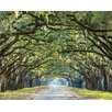 Hokku Designs Ye Old Trees 3.5m x 2.8m Wallpaper Wall Mural