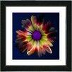 "Studio Works Modern ""Fire Flower"" by Zhee Singer Framed Graphic Art in Black"