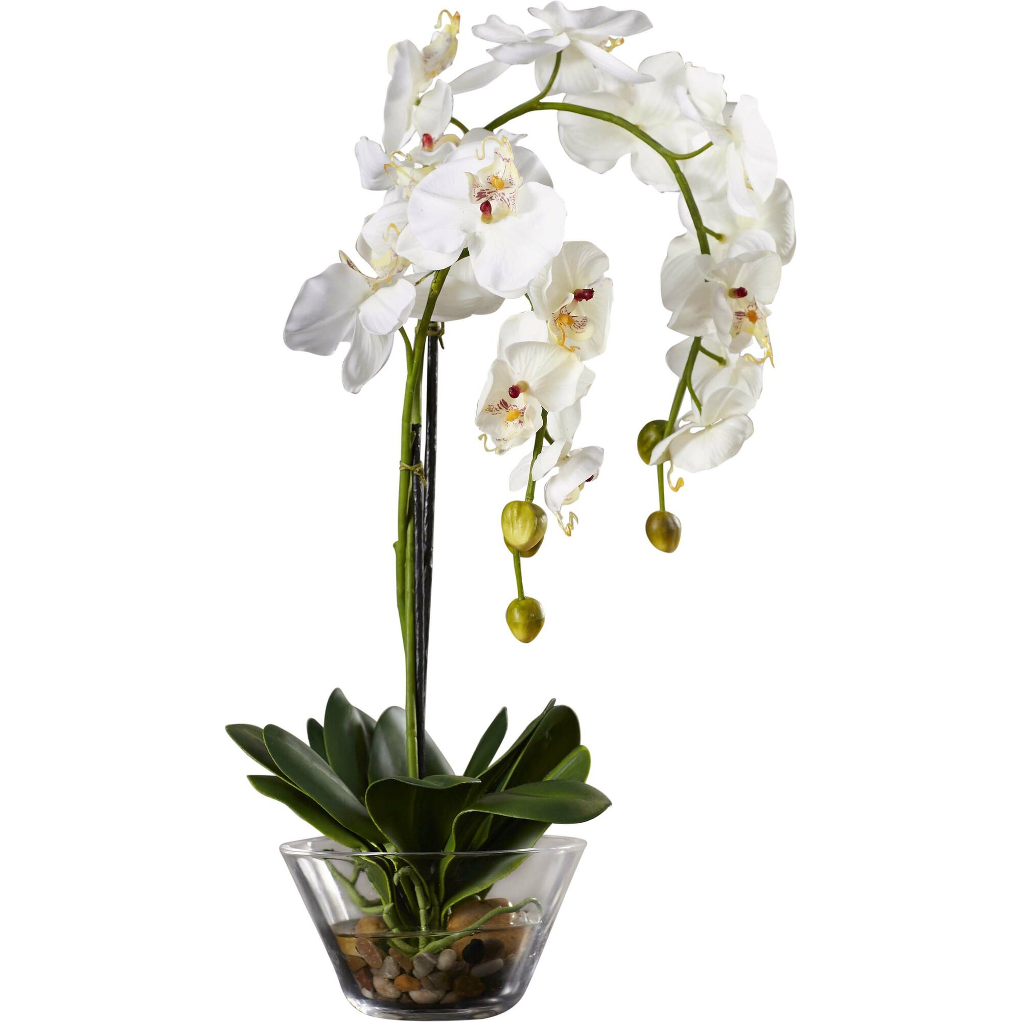 A Bouquet Of White And Purple Orchids In Vase The Is Standing On