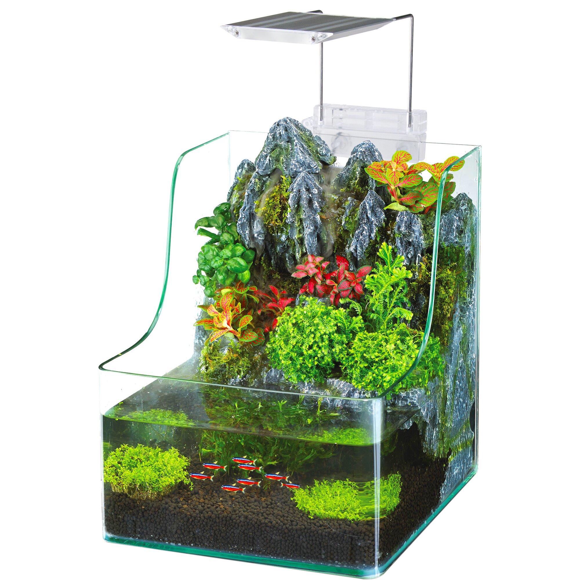 Penn plax 1 gallon aquaterrium aquarium tank reviews for 10 fish are in a tank riddle answer