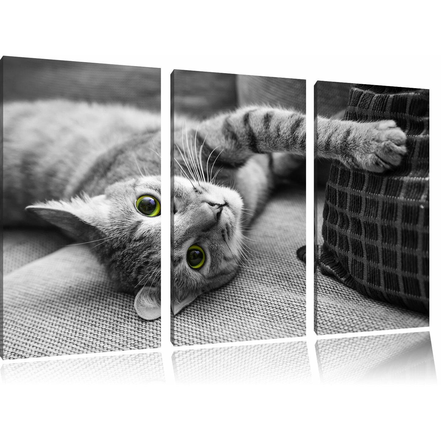 pixxprint 3 tlg leinwandbilder set niedliche katze spielt mit kissen fotodruck. Black Bedroom Furniture Sets. Home Design Ideas