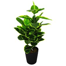 Artificial Rubber Ficus Plant