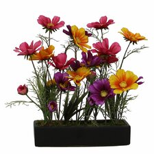 Floral Wild Coreopsis in Tray