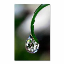 """""""Drop of Clementis"""" by Steve Wall Photographic Print on Wrapped Canvas"""
