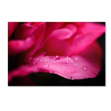 """""""Peony Drops"""" by Philippe Sainte-Laudy Photographic Print on Wrapped Canvas"""