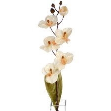 Orchid Plant (Set of 3)