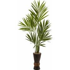 Kentia Tree in Planter
