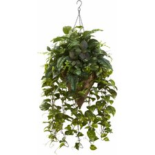 Vining Mixed Greens Hanging Plant in Basket
