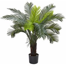 Cycas Tree in Pot