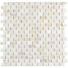 "Shore 1"" x 1"" Seashell Mosaic Wall Tile in White"