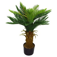 Artificial Cycas Tree