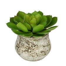 Artificial Echevaria Succulent Desk Top Plant in Decorative Vase