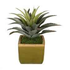 Artificial Star Succulent Desk Top Plant in Pot