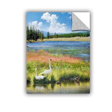 Swans Madison River by Chris Vest Wall Mural