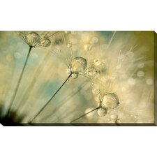 """""""Dandy Drops and Sparkles"""" by Sharon Johnstone Photographic Print on Wrapped Canvas"""