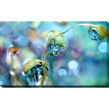 """""""Rainbow Moss Drops"""" by Sharon Johnstone Photographic Print on Wrapped Canvas"""