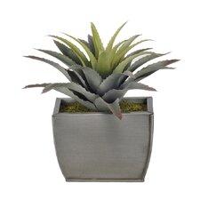 Artificial Star Succulent Desk Top Plant in Decorative Vase