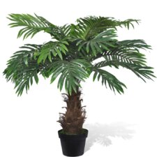 Cycus Palm in Pot