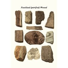 'Fossilized Petrified Wood' by James Parkinson Graphic Art