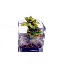 """Faux Succulents Planted """"water"""" Desk Top Plant in Terrarium"""