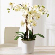 Orchid Planter Artificial Plant