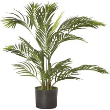 Areca Palm Tree Floor Plant