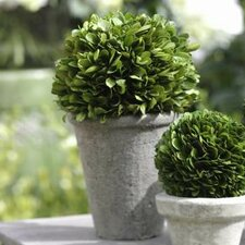 Boxwood Ball Topiary Floor Plant in Pot