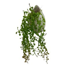 Faux Cascading Succulent Hanging Plant in Vase