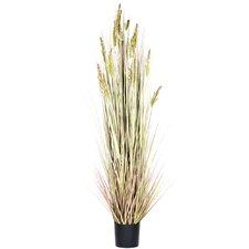 Grain Grass in Round Pot