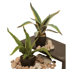 Sanseveria Succulent Plant in Ceramic Pot (Set of 2)