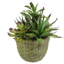 Decorative Artificial Mixed Succulent Arrangement Desk Top Plant in Pot
