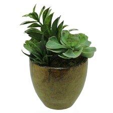 Artificial Mixed Succulent Desk Top Plant in Decorative Pot