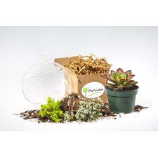 4 Piece Globe Succulent Terrarium Set