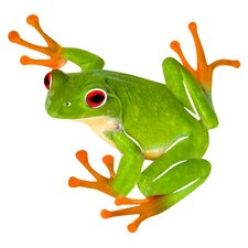 Frog Wall Décor