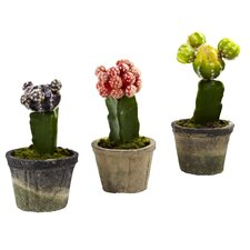 Janssen Colorful Cactus Tree in Planter (Set of 3)