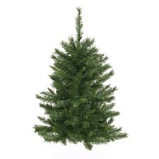 Real Christmas Trees You'll Love | Wayfair