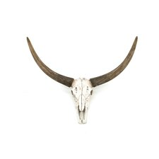 Ox Head Skull Wall Décor (Set of 3)