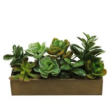 Artificial Mixed Succulent Desk Top Plant in Planter
