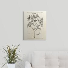 'Tropical Leaf Study I' Graphic Art on Wrapped Canvas