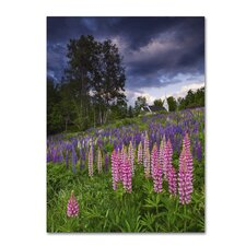 Lupines on the Hill' by Michael Blanchette Photographic Print on Wrapped Canvas by Trademark Fine Art